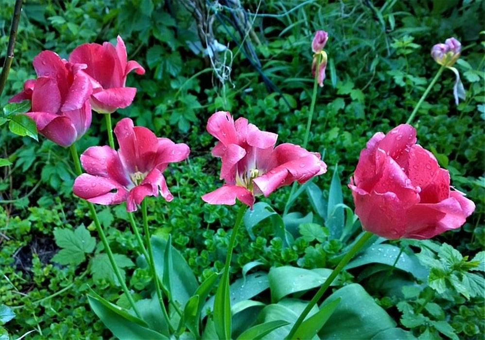 onderhoud tuin planten