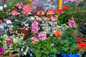 planten kiezen tuin