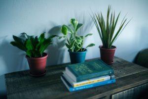 Zijn planten in huis écht goed voor de gezondheid?