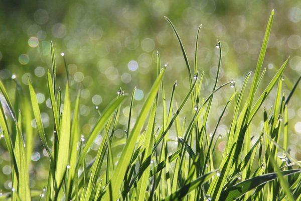Dit zijn de meeste gebruikte grassoorten voor in je tuin!
