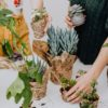 De kamerplant- een leuk en verrassend cadeau