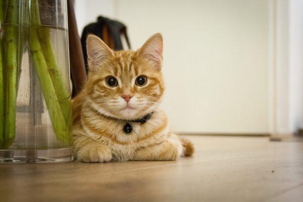 Een kat, wat doet die met mijn interieur